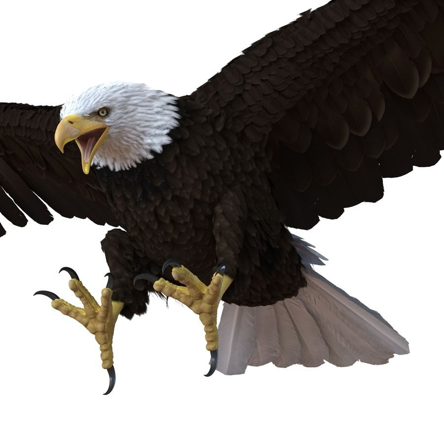 Bald Eagle Rigged royalty-free 3d model - Preview no. 45