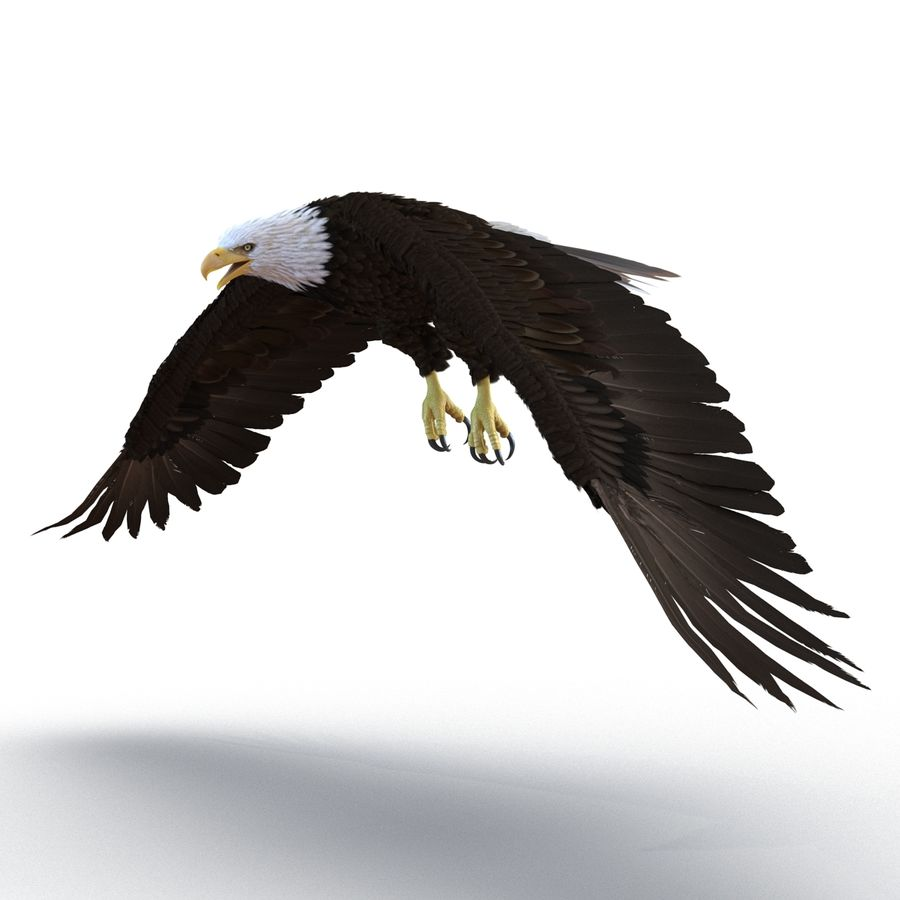 Bald Eagle Rigged royalty-free 3d model - Preview no. 24