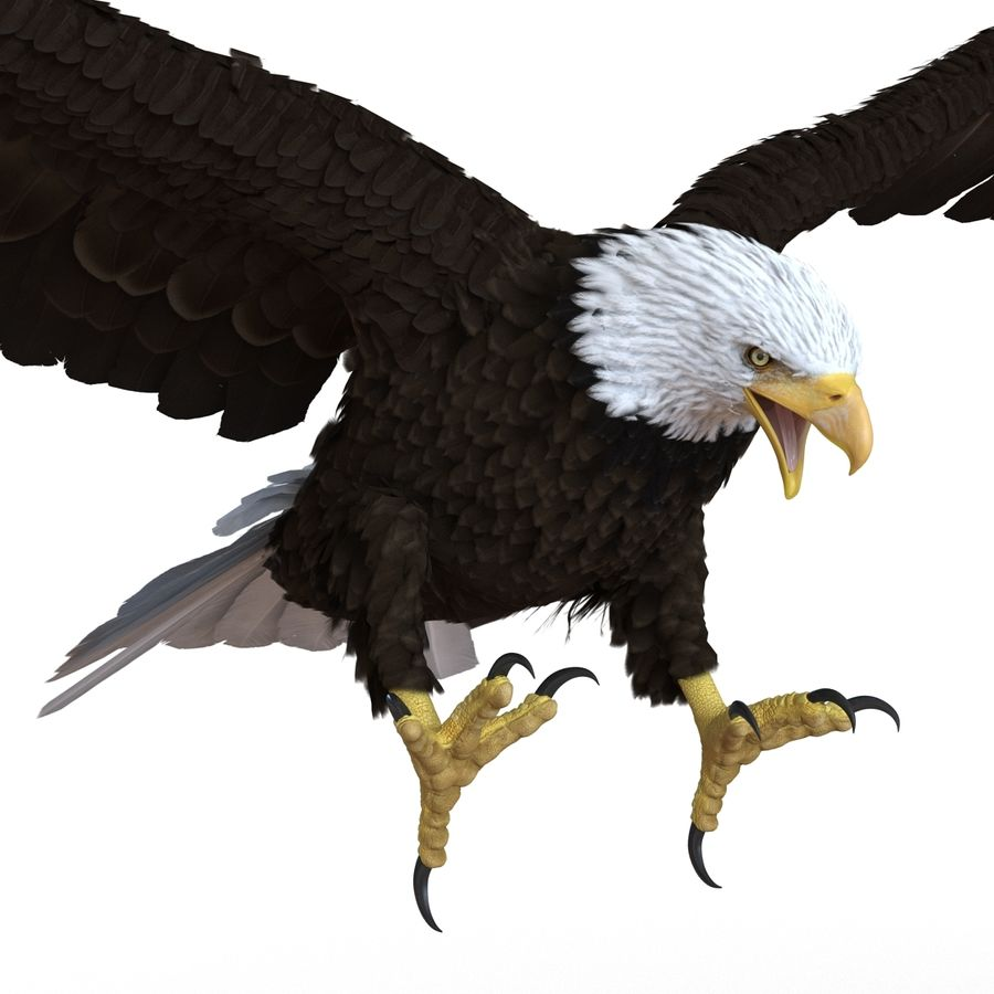 Bald Eagle Rigged royalty-free 3d model - Preview no. 44