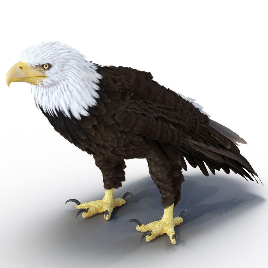 Bald Eagle Rigged royalty-free 3d model - Preview no. 3