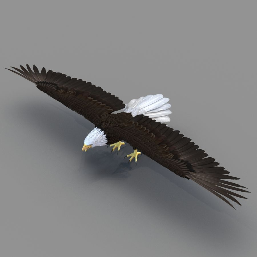 Bald Eagle Rigged royalty-free 3d model - Preview no. 31