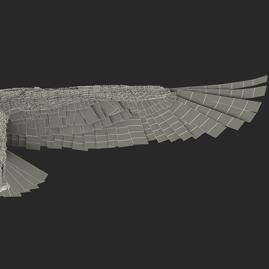 Bald Eagle Rigged royalty-free 3d model - Preview no. 72