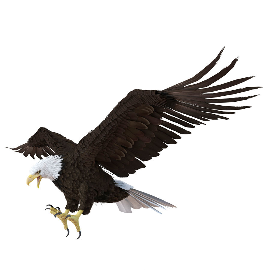 Bald Eagle Animated royalty-free 3d model - Preview no. 19