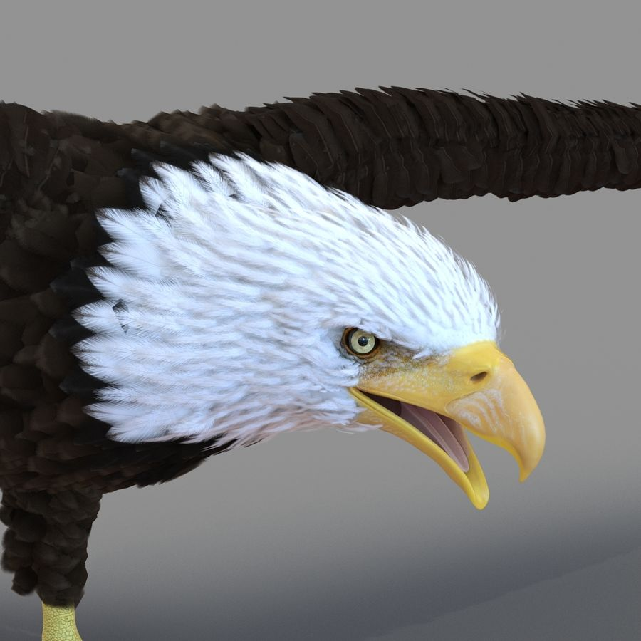 Bald Eagle Animated royalty-free 3d model - Preview no. 53