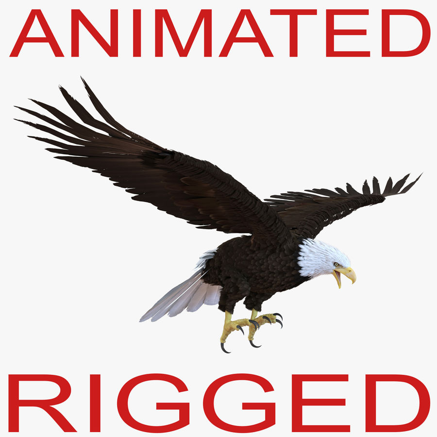 Bald Eagle Animated royalty-free 3d model - Preview no. 1
