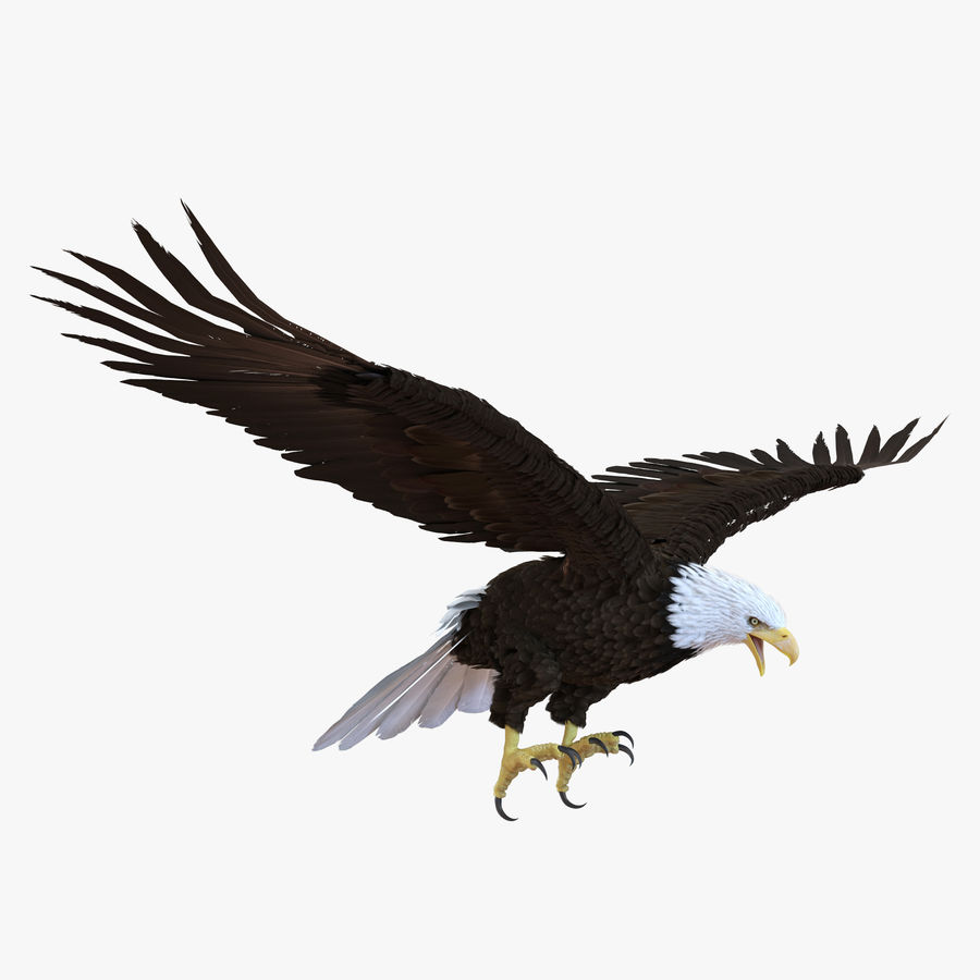 Bald Eagle Animated royalty-free 3d model - Preview no. 2