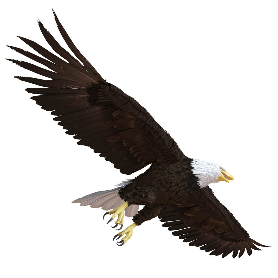Bald Eagle Animated royalty-free 3d model - Preview no. 13