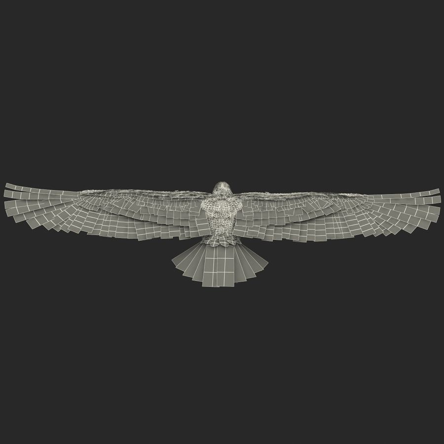 Bald Eagle Animated royalty-free 3d model - Preview no. 68