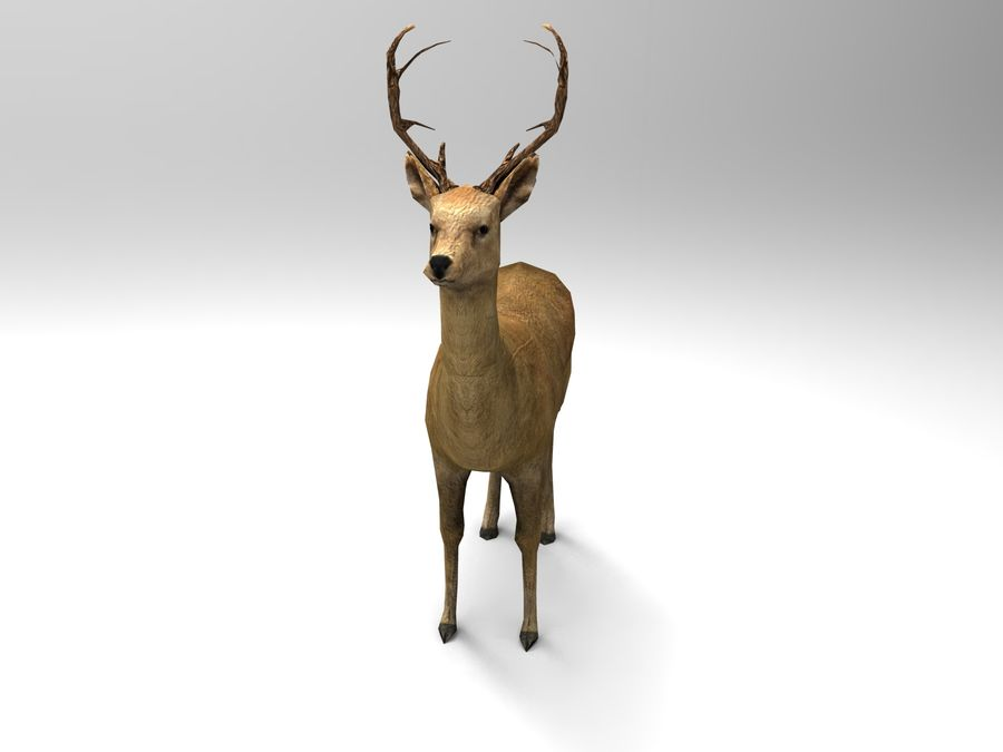 Hirsch royalty-free 3d model - Preview no. 9