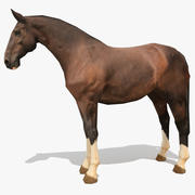 LowPoly Horse C (Каштан печени) 3d model