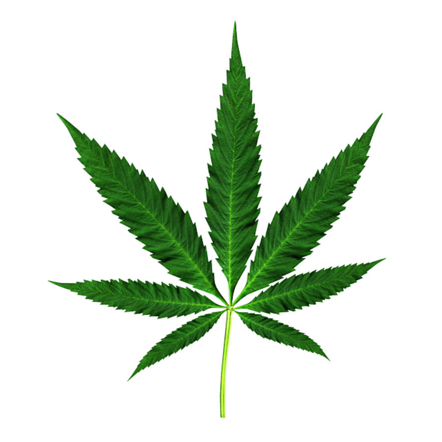 Cannabis Leaf royalty-free 3d model - Preview no. 1