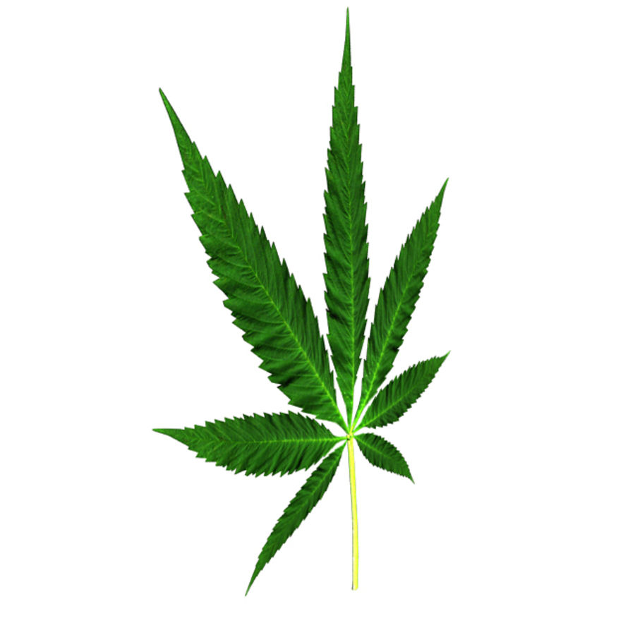 Cannabis Leaf royalty-free 3d model - Preview no. 2