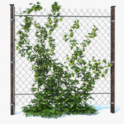 Garden Hop Plant (1) 3d model