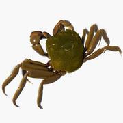 日本手套螃蟹 3d model
