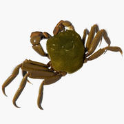 Japanese mitten crab 3d model