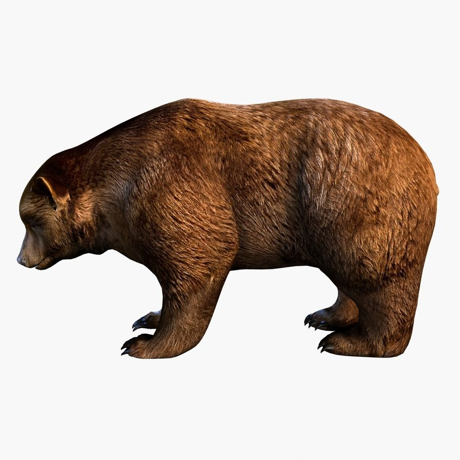 Bear royalty-free 3d model - Preview no. 2