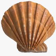 Sea Shell 15 3d model