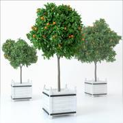 Mandarino 3d model