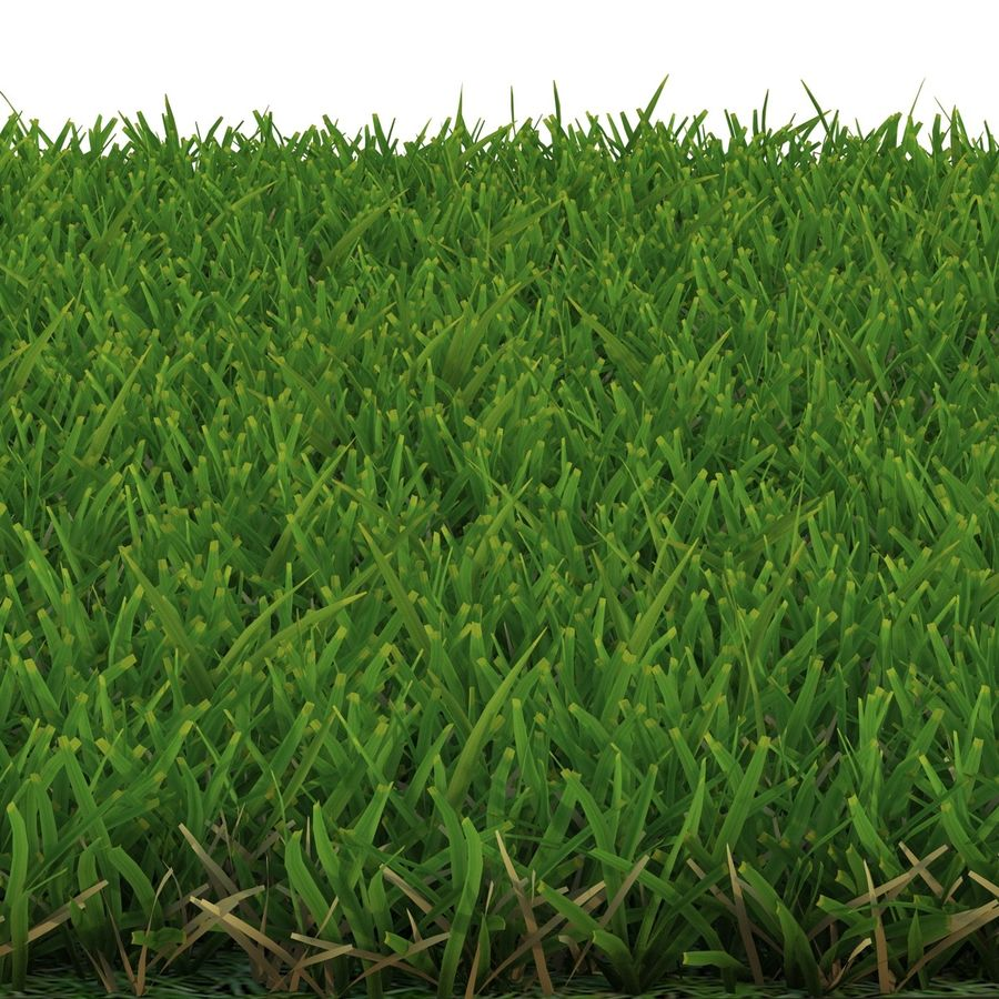 Duizendpoot Warm Season Grass royalty-free 3d model - Preview no. 6