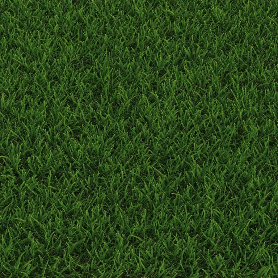 Duizendpoot Warm Season Grass royalty-free 3d model - Preview no. 8