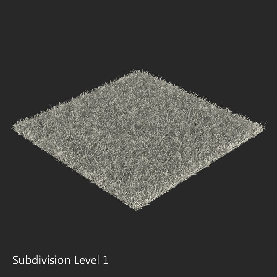 Duizendpoot Warm Season Grass royalty-free 3d model - Preview no. 16