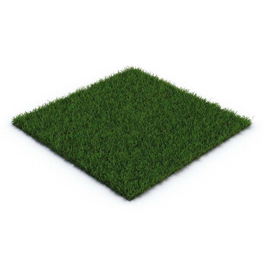 Duizendpoot Warm Season Grass royalty-free 3d model - Preview no. 3