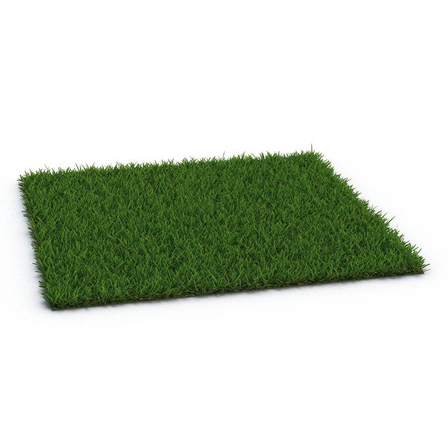 Duizendpoot Warm Season Grass royalty-free 3d model - Preview no. 4
