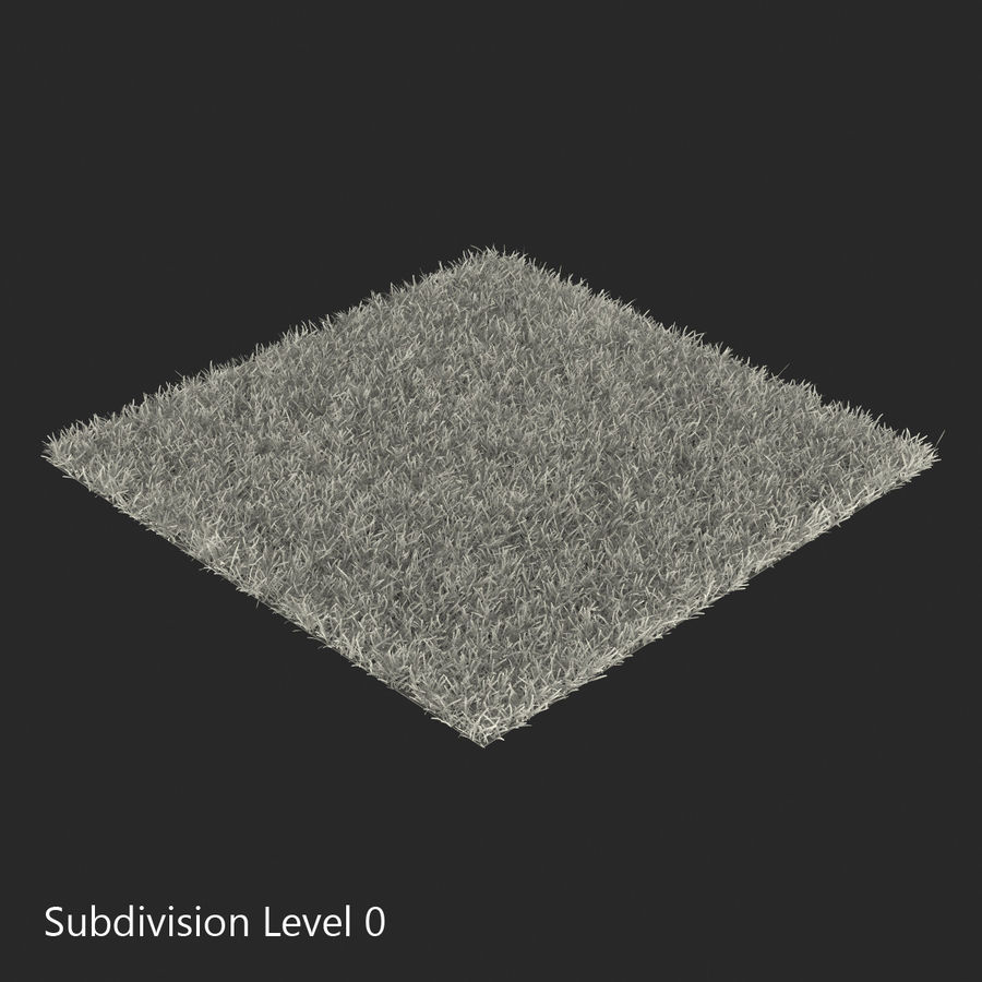 Duizendpoot Warm Season Grass royalty-free 3d model - Preview no. 15