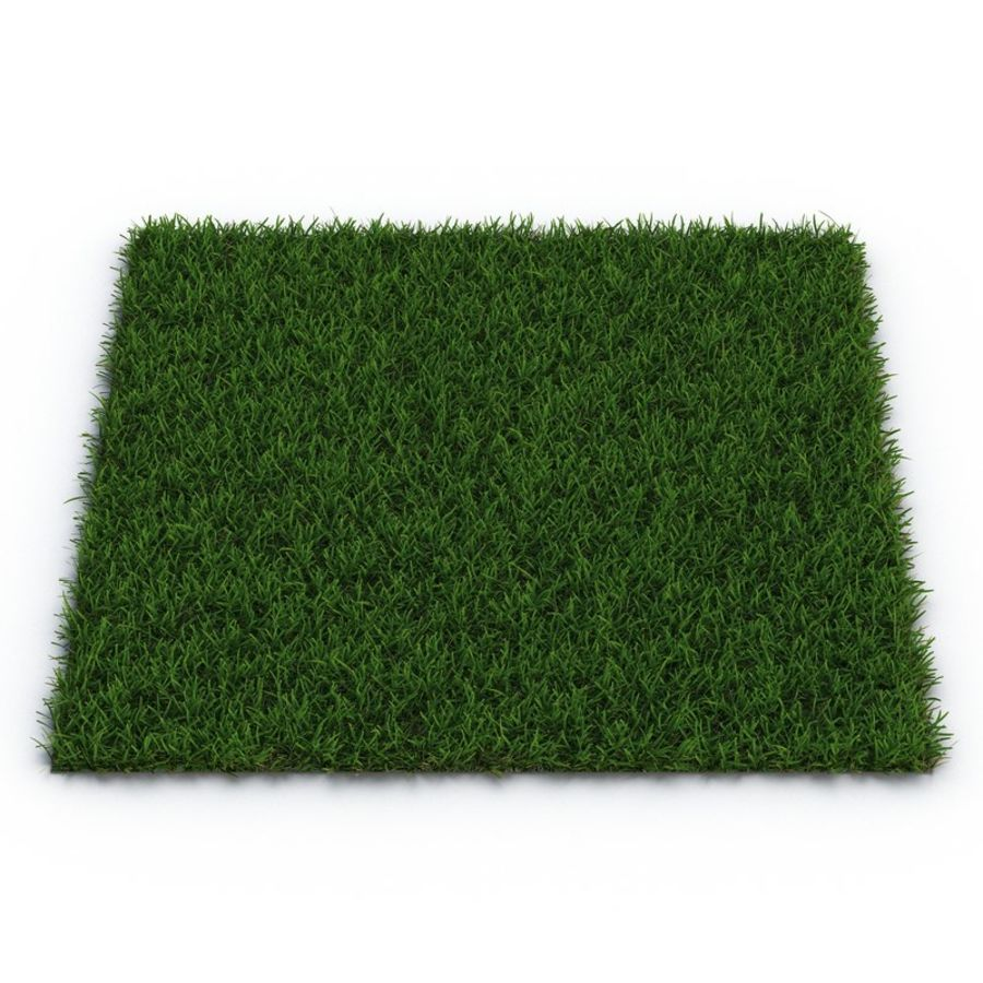Duizendpoot Warm Season Grass royalty-free 3d model - Preview no. 2
