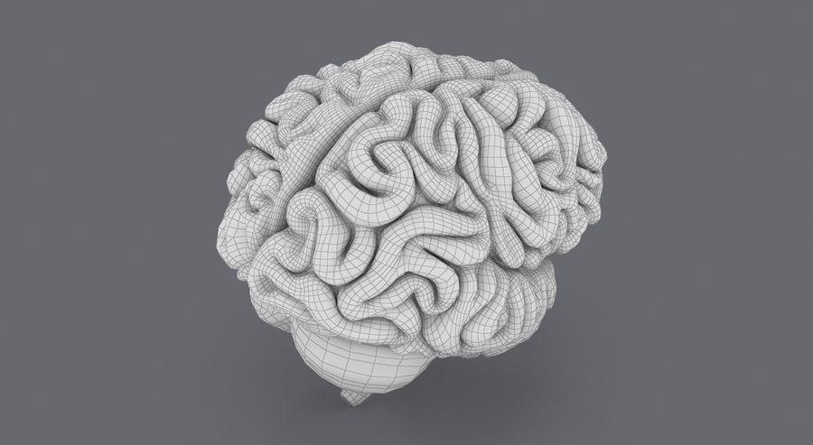 Mänsklig hjärna royalty-free 3d model - Preview no. 19