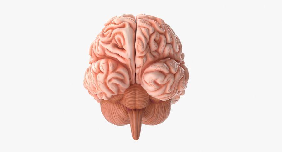 Mänsklig hjärna royalty-free 3d model - Preview no. 11
