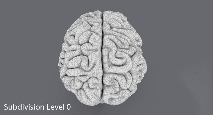Mänsklig hjärna royalty-free 3d model - Preview no. 14