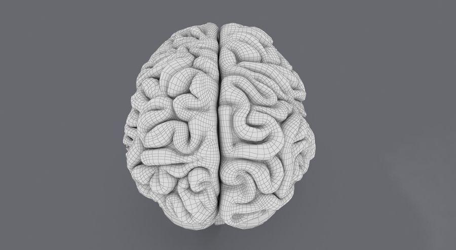 Mänsklig hjärna royalty-free 3d model - Preview no. 18