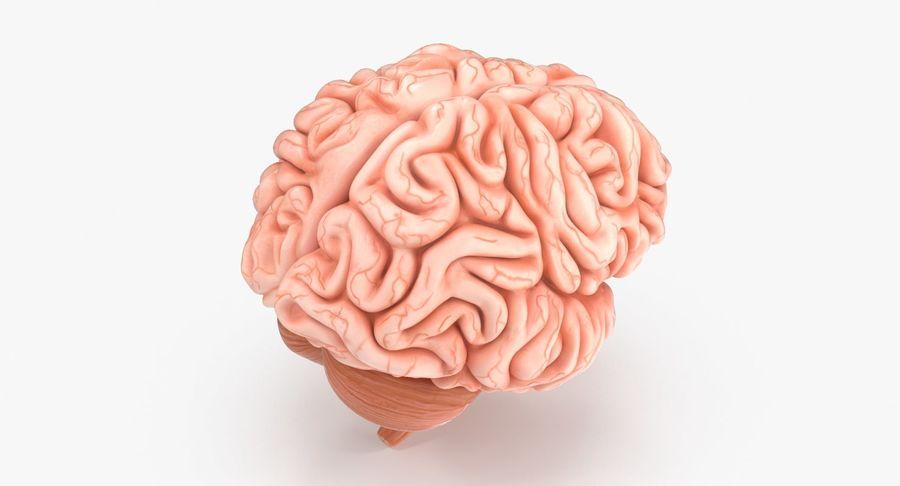 Mänsklig hjärna royalty-free 3d model - Preview no. 5