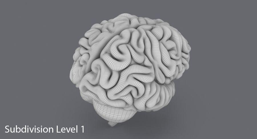 Mänsklig hjärna royalty-free 3d model - Preview no. 17