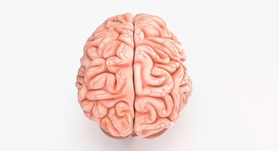 Mänsklig hjärna royalty-free 3d model - Preview no. 4