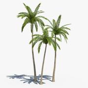 Coconut Palms Set 01 3d model