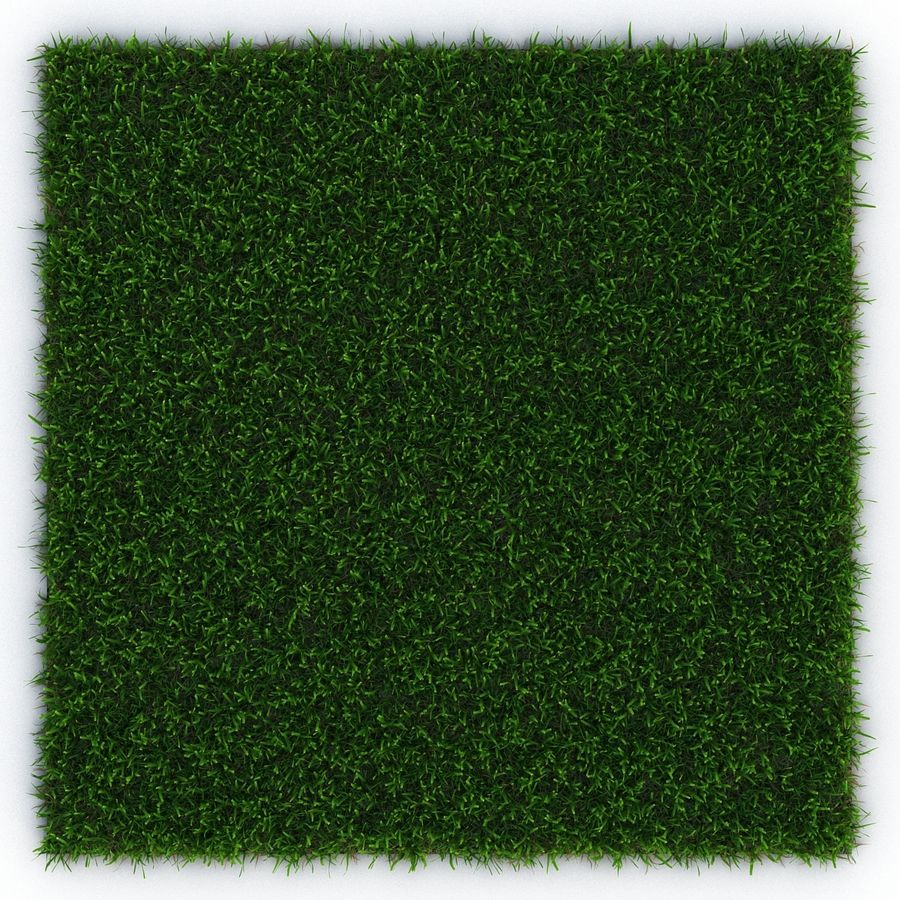 Zoysia Grass royalty-free 3d model - Preview no. 5