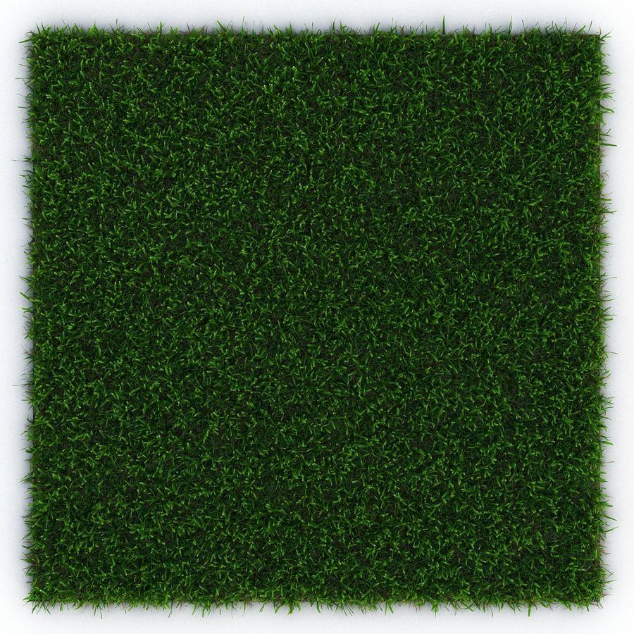 Zoysia Grass royalty-free 3d model - Preview no. 5