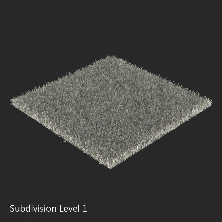 Zoysia Grass royalty-free 3d model - Preview no. 15