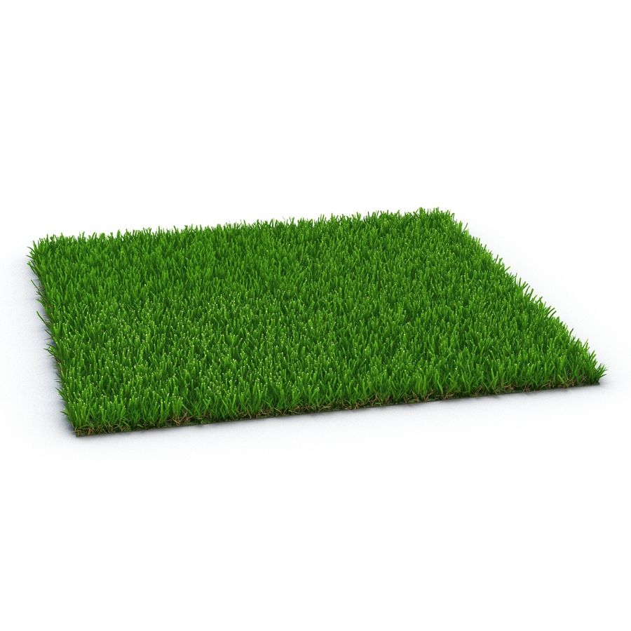 Zoysia Grass royalty-free 3d model - Preview no. 4
