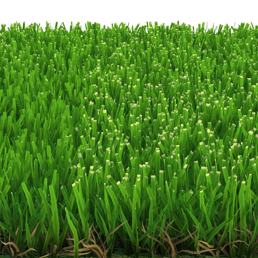Zoysia Grass royalty-free 3d model - Preview no. 7