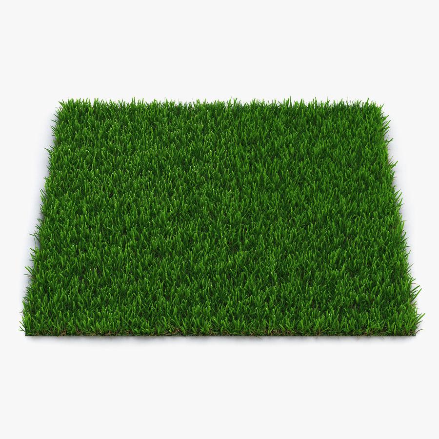 Zoysia Grass royalty-free 3d model - Preview no. 1