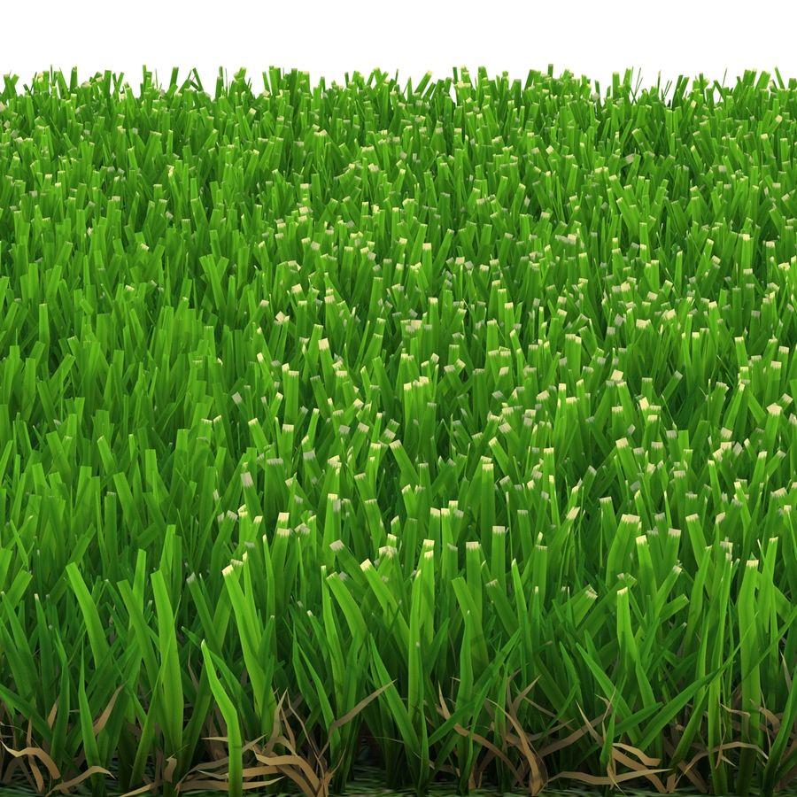 Zoysia Grass royalty-free 3d model - Preview no. 7