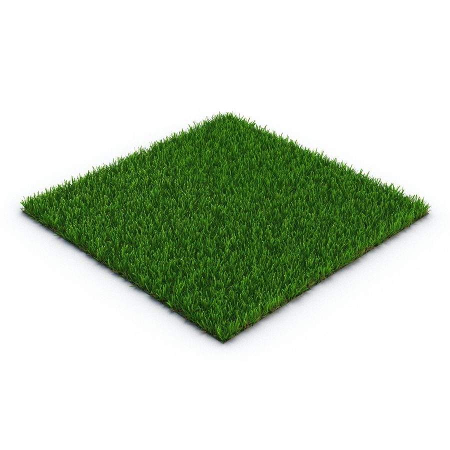 Zoysia Grass royalty-free 3d model - Preview no. 3