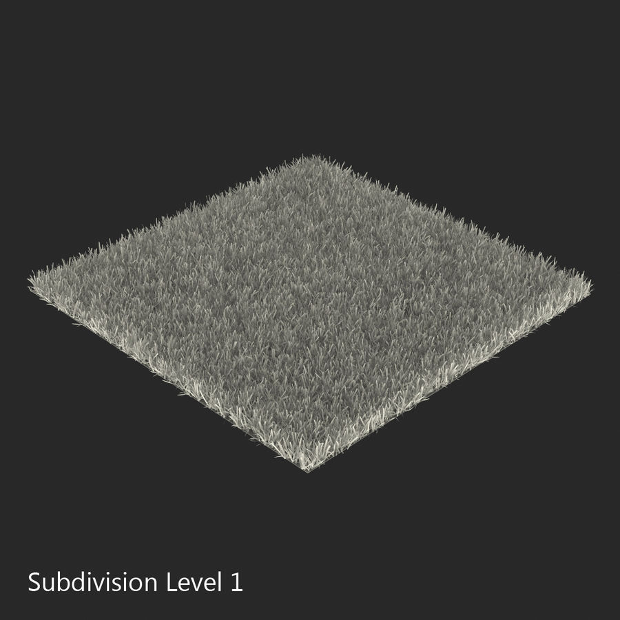 Zoysia Grass royalty-free 3d model - Preview no. 15