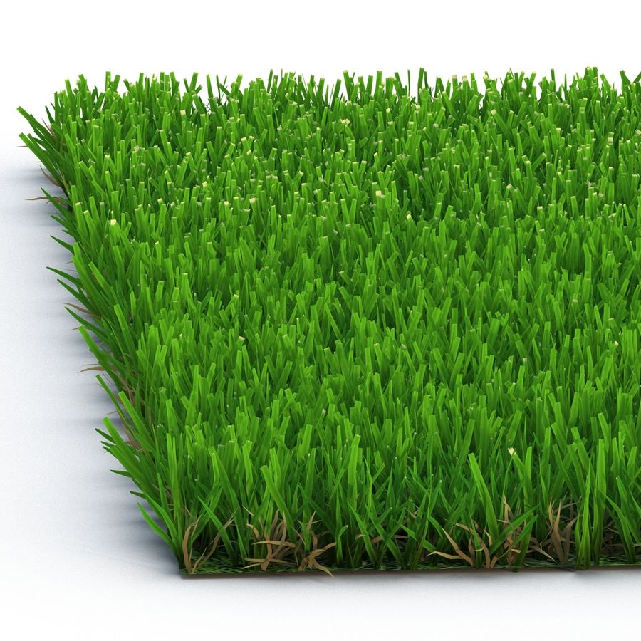 Zoysia Grass royalty-free 3d model - Preview no. 8