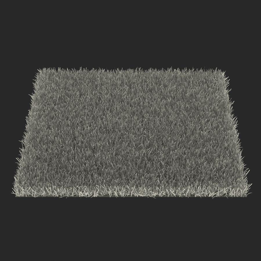 Zoysia Grass royalty-free 3d model - Preview no. 19