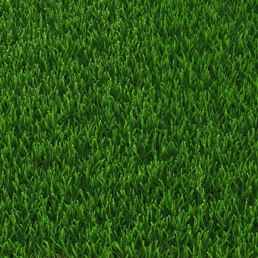 Zoysia Grass royalty-free 3d model - Preview no. 6