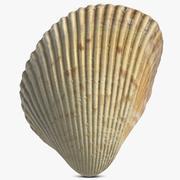 Seashell 16 modelo 3d